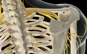 Плечевое нервное сплетение