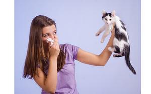 Почему развивается аллергия