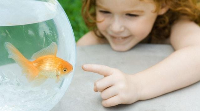 рыбка и девочка
