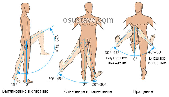движение в коленном суставе