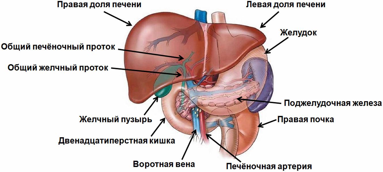 Диффузные изменения печени и поджелудочной железы