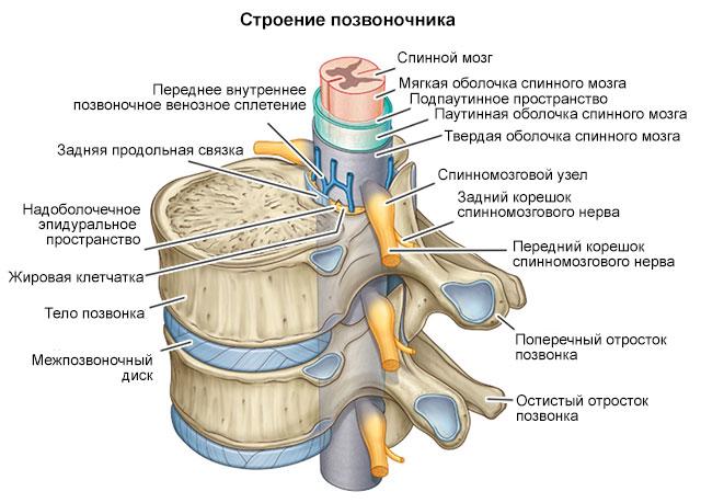 канал костного мозга