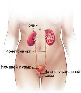 Инфекции мочевыводящих путей. Симптомы, причины лечение