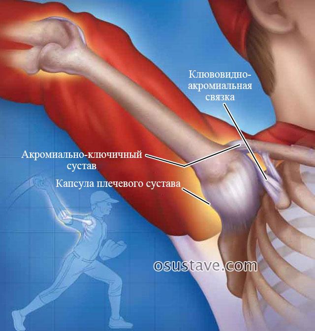 капсула плечевого сустава при поднятии руки вверх