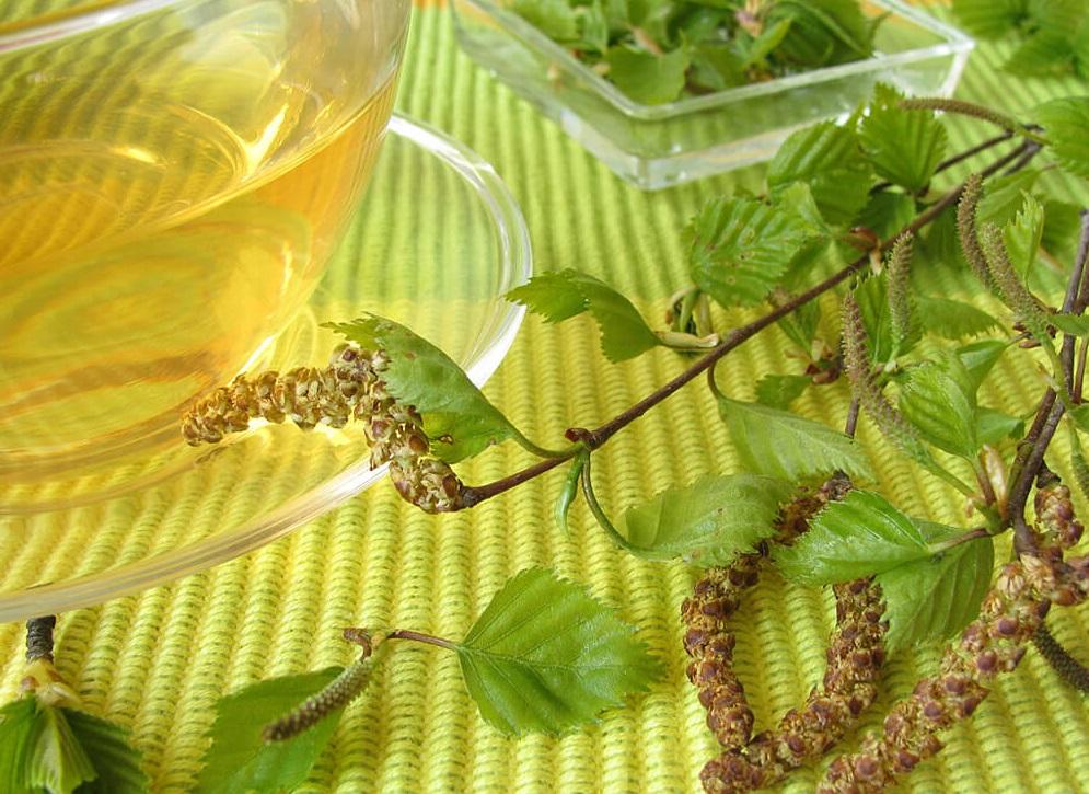 Печеночный чай заготовка сырья