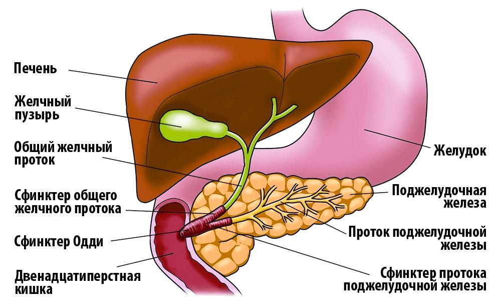 Болезни печени и поджелудочной железы симптомы