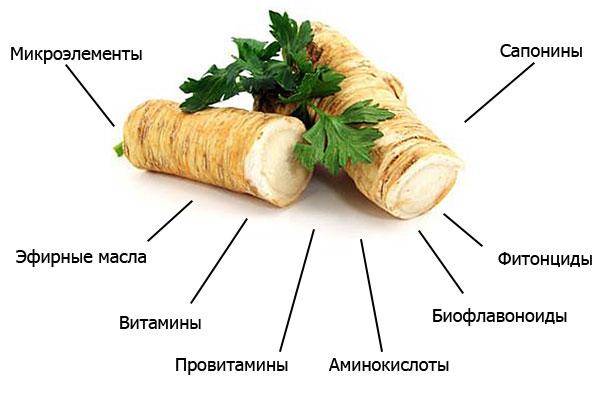 полезные вещества, содержащиеся в корне хрена