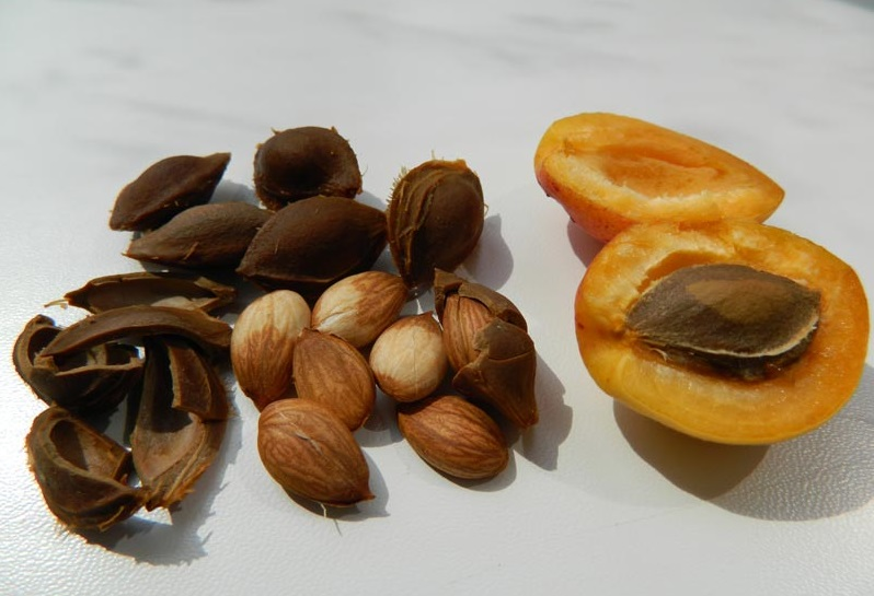 Ядра абрикосовой косточки при жировом гепатозе