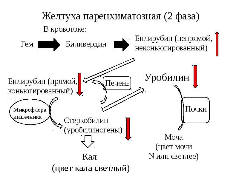 Механизм паренхиматозной желтухи