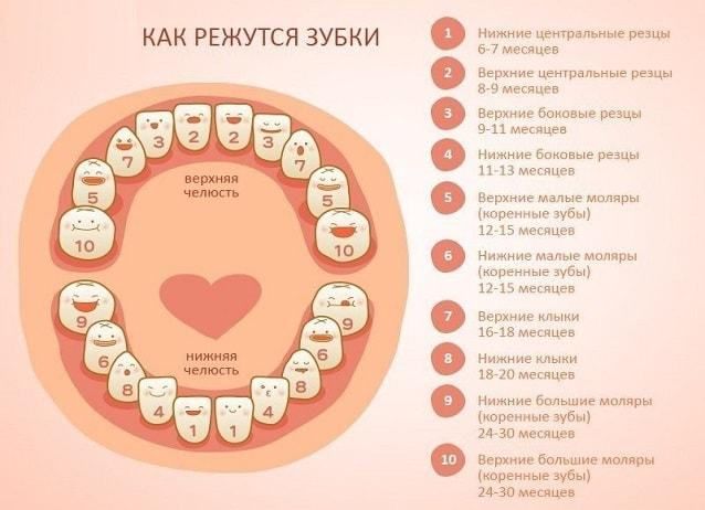 когда появляются первые зубы у ребенка
