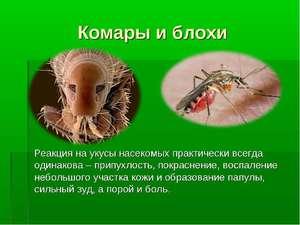 Профилактика укусов комаров