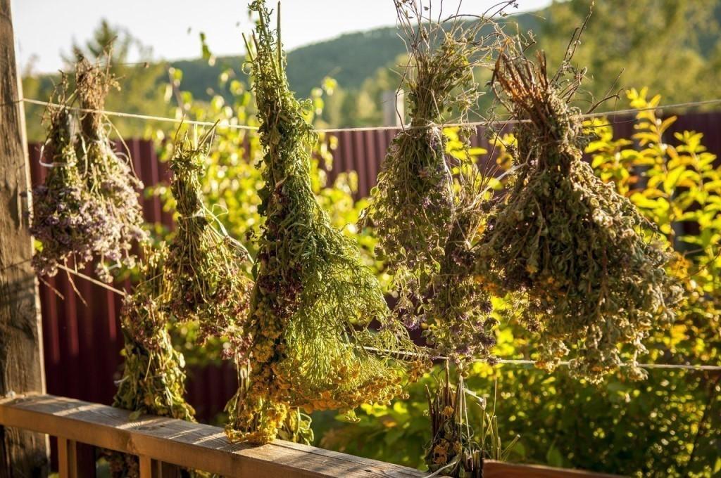 Травяные сборы при панкреатите и холецистите
