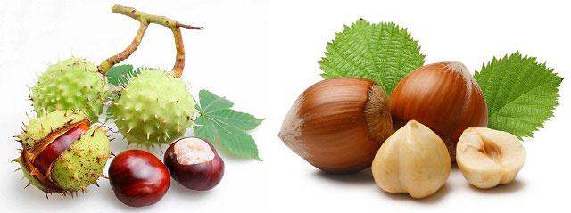 конский каштан и плоды лещины