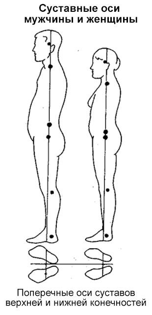 сравнение мужской фигуры и женской