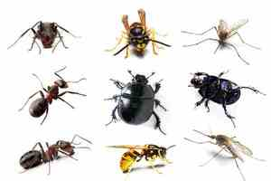 Виды домашних насекомых, кусающих человека