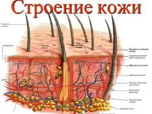 Как выглядит кожа под микроскопом