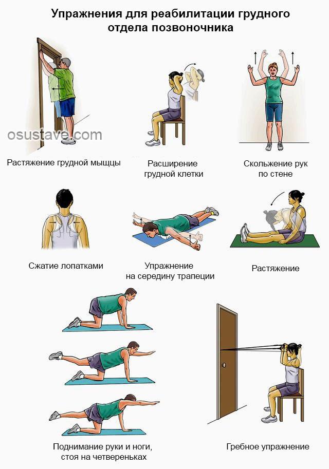 упражнения для реабилитации грудного отдела позвоночника