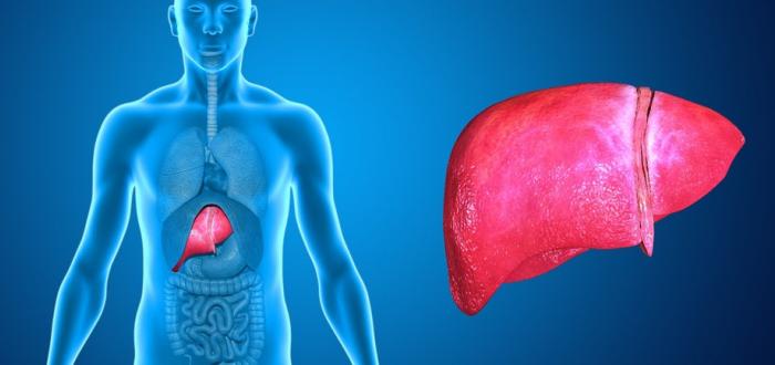 Фиброз печени особенности болезни