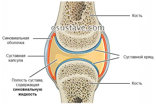 синовиальная жидкость в суставе