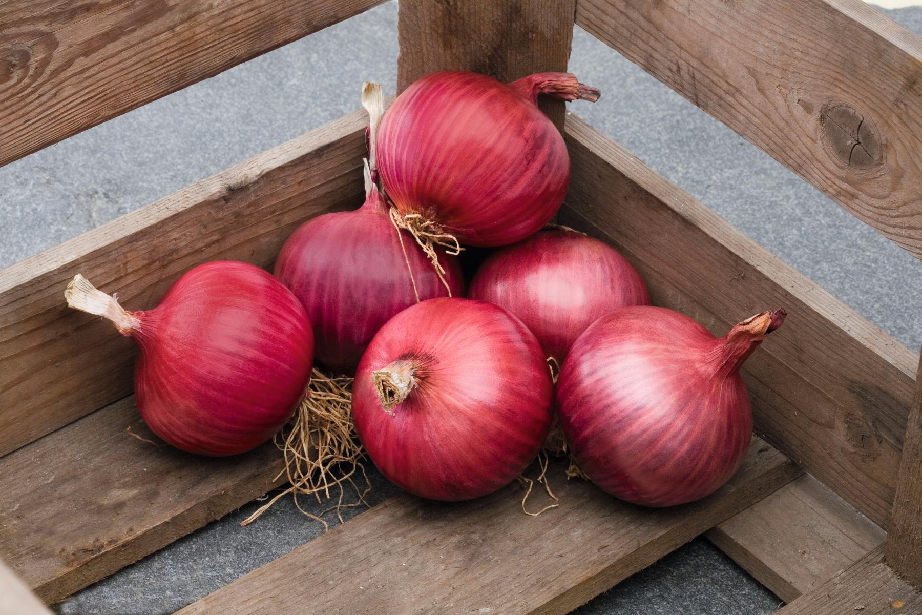 Красный лук польза для печени