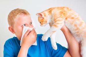 Признаки аллергии на кошек