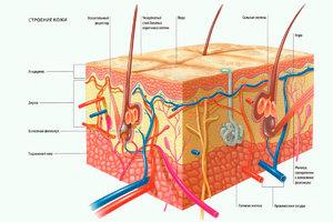 Как ухаживать за здоровьем кожи