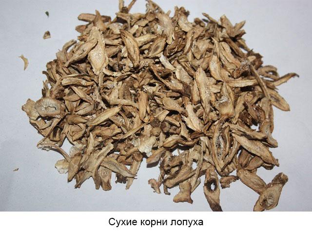 сухие корни лопуха